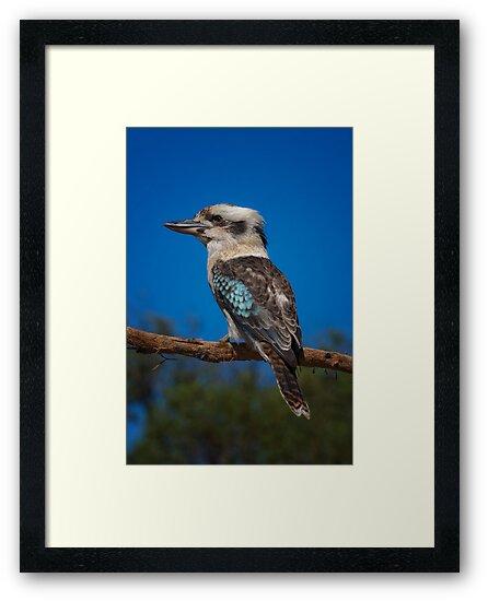 Kookaburra by Frank Yuwono