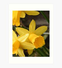 Daffies Art Print
