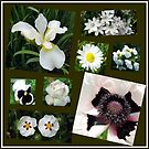 White Summer Flowers Collage von BlueMoonRose