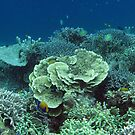 Coral at Wayag I by Reef Ecoimages