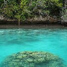 Jungle Reef at Wayag by Reef Ecoimages
