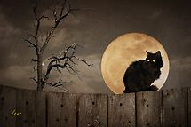 Cat On A Fence by George Lenz