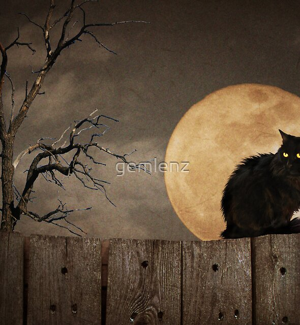 Cat On A Fence by gemlenz