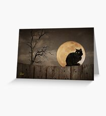 Cat On A Fence Greeting Card