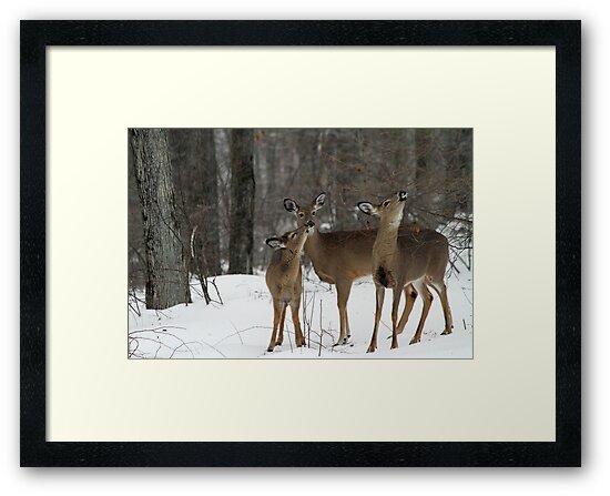 Deer Affection by Karol Livote