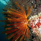 Wall at Misool by Reef Ecoimages