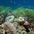 Reef at Misool by Reef Ecoimages
