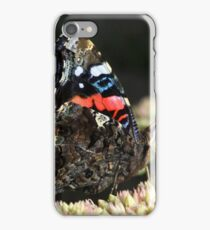 A Red Admiral Butterfly iPhone Case/Skin