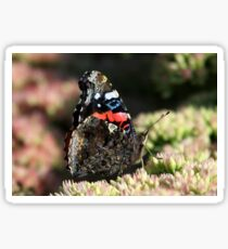 A Red Admiral Butterfly Sticker