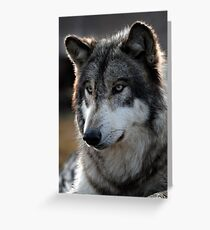 back light wolf Greeting Card