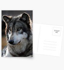 back light wolf Postcards