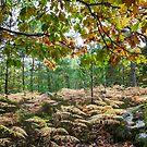 Fontainebleau Forrest, Autumn 2015 by David Mapletoft