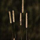 Prairie Grass by Brian R. Ewing