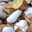 Stones & Leaves by vbk70