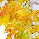 Autumn Snow Portrait by Bo Insogna