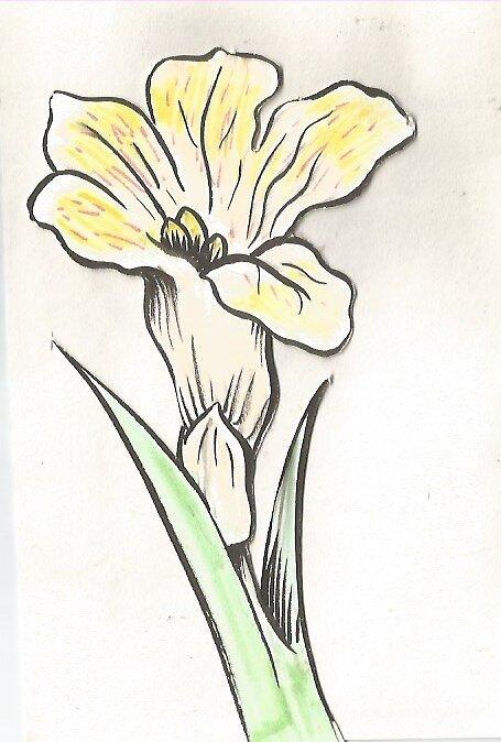 tiger lily by LydiaVN