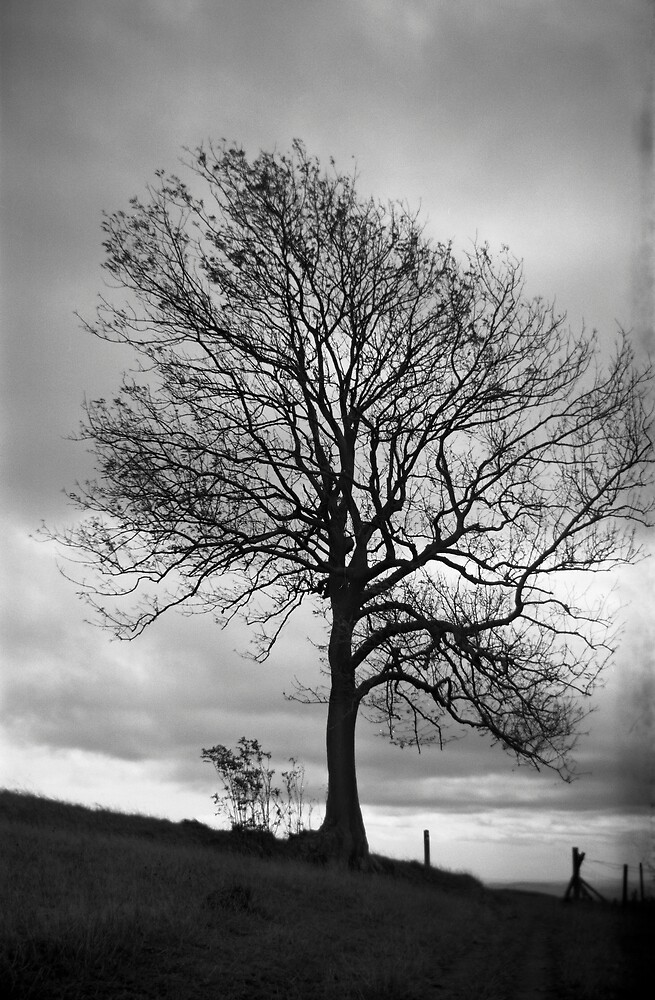 Lone Tree, Waseley Hills Country Park by Matthew Walters