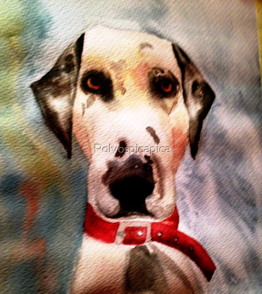 Dalmatian dog by Polvospicapica