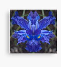 Iris # 459 Canvas Print