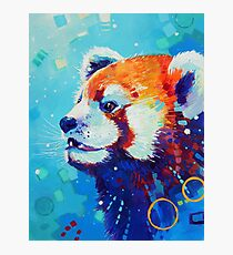 Red Panda in Blue Photographic Print