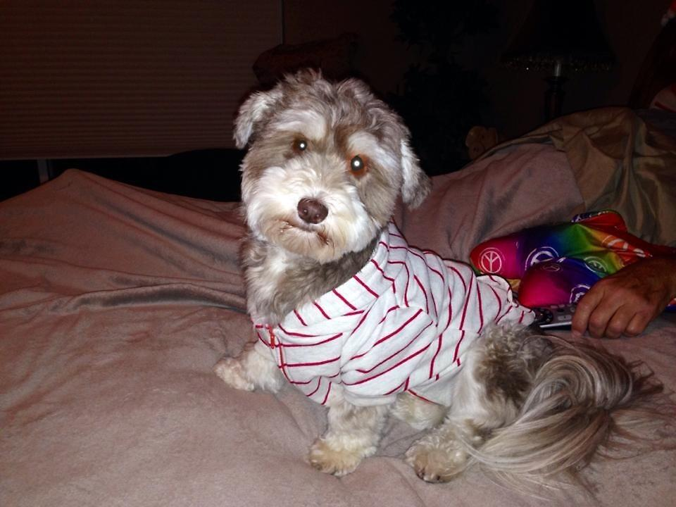 Dog in Sweatshirt by emileerose