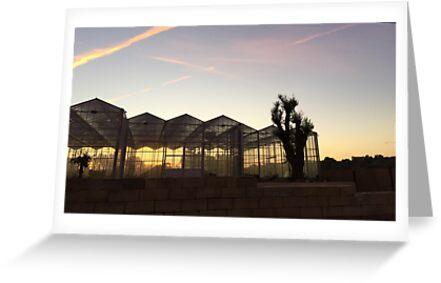 Sunrise Greenhouse by matabela