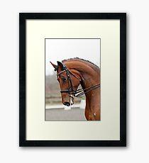 Grand Prix Dressage Stallion Framed Print