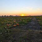 Pumpkin Patch by Jordan Selha