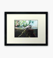 Reptiles Fighting Framed Print