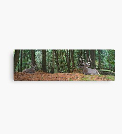 The Bucks stop here Canvas Print