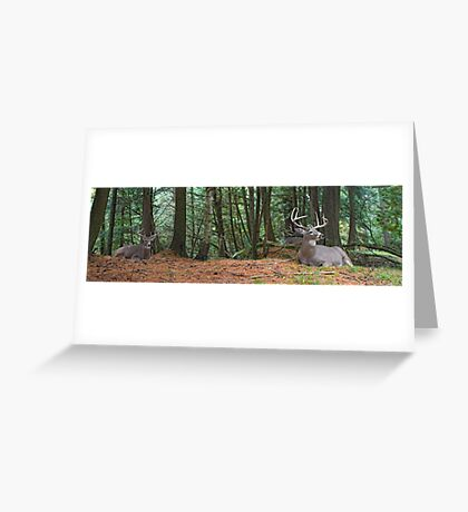 The Bucks stop here Greeting Card