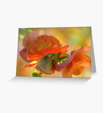 A Beguiling Begonia Greeting Card