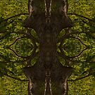 Tree panorama #7 by TIMOTHY  POLICH