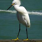 Birds On Pier : Strike The Pose by artisandelimage