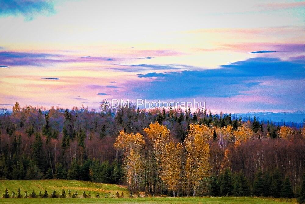 Kincaid Park-Anchorage, Alaska by Amber D Hathaway Photography