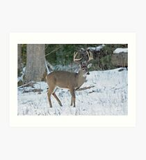 East Tennessee Whitetail Art Print