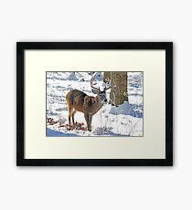 Winter Forage Framed Print