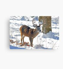 Winter Forage Canvas Print