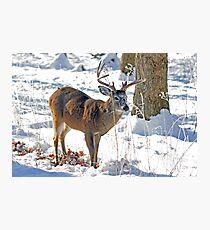 Winter Forage Photographic Print