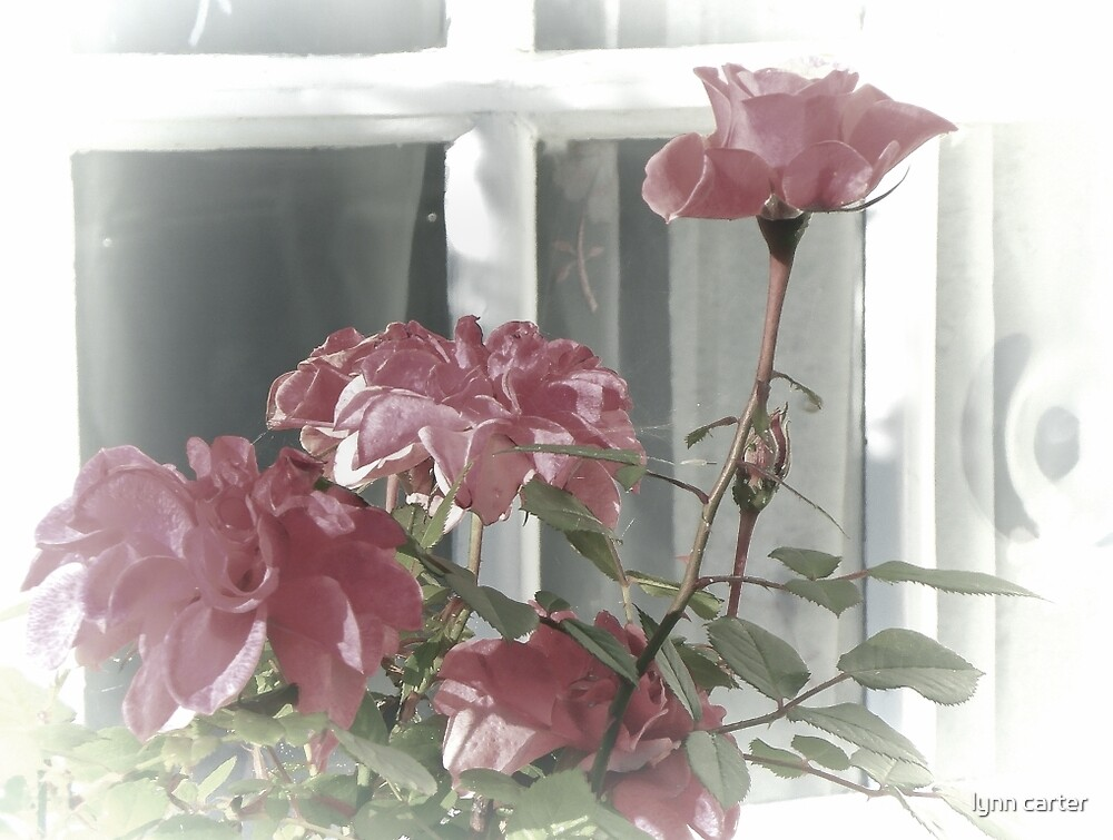 Roses by the window, Lyme Dorset UK by lynn carter