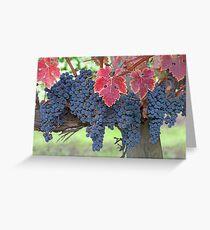 Grapes, Napa Valley, California Greeting Card