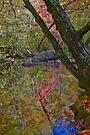 Impressionist Reflection by photosbyflood