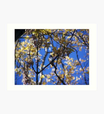 Bird Collection 001 Art Print