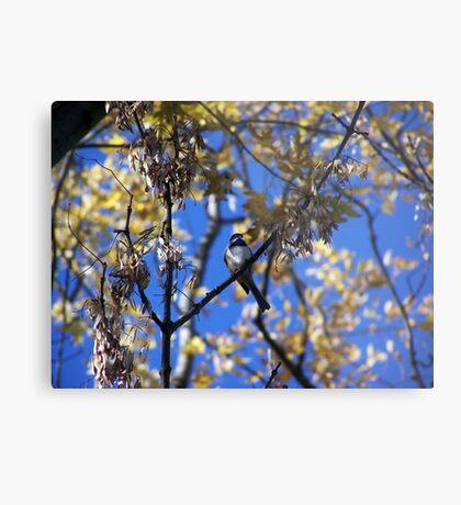 Bird Collection 001 Metal Print