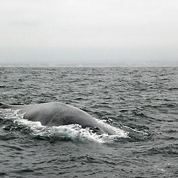 Leviathan by soyrwoo