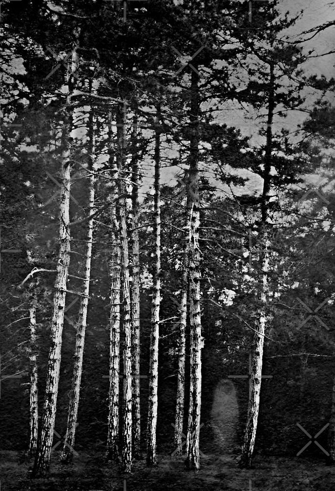 She Walks Alone by Scott Mitchell