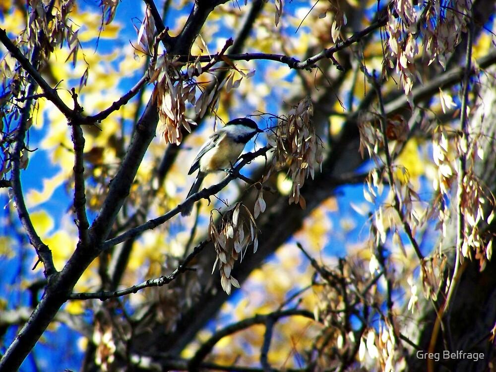 Bird Collection 002 by Greg Belfrage