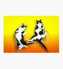 Feline It! - Color Version Photographic Print