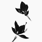 Black White [iPhone / iPod Case] by Damienne Bingham