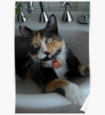 A cat in the sink Poster